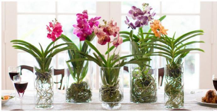 Salonda orkideler