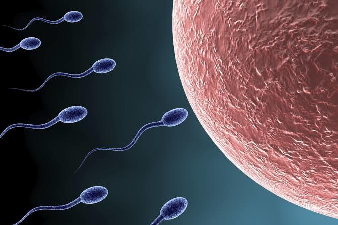 Spermin de Kalitelisi Makbul! İşte Sperm Düşmanı Etkenler