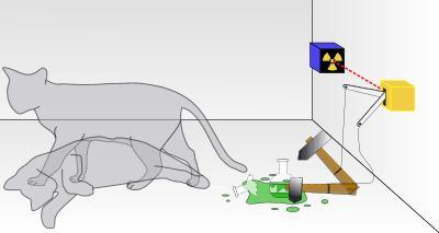 Deney Düzeneği ve Kedimiz