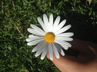 Adet Sancısına Bitkisel Çözümler ve Doğa Harikası Yöntemler