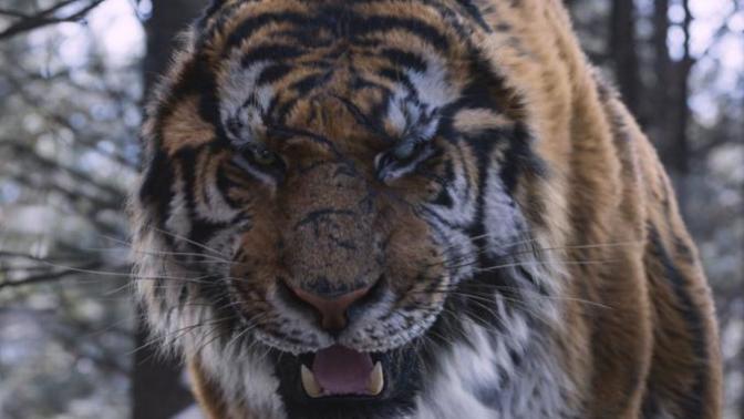 Kaplan Yemi Olmamak: Daeho / The Tiger