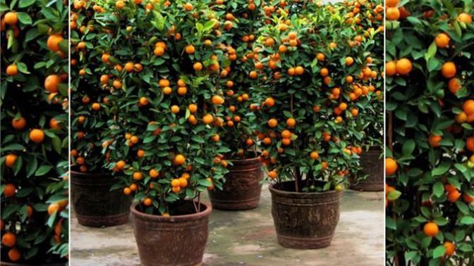 Hem Evde Kalıp Hem Kendi Sebzesini Yetiştirmek İsteyenlere Harika Öneriler