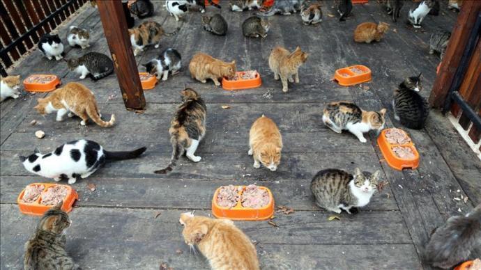 Sokak Hayvanlarını Beslerken Nelere Dikkat Etmeliyiz?
