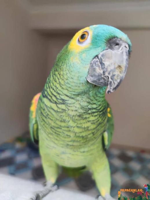 Papağan Sevenler Buraya: Birbirinden Renkli Papağan Türleri