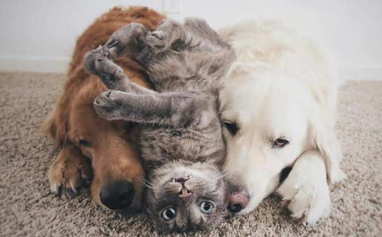 Kedi ile Köpek Dost Olursa Ne Olur?
