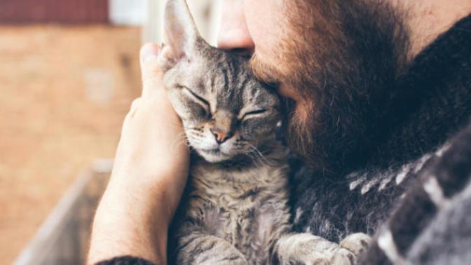 Kedi Sahiplenmemiz İçin Müthiş Nedenler :)