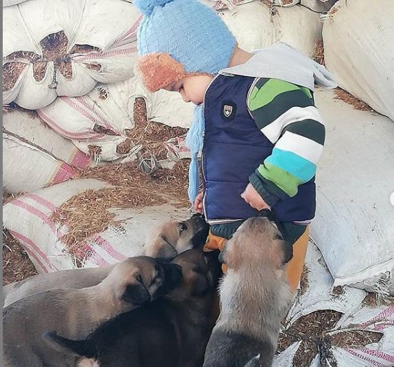 Benim Bebeklerim ve Köpeklerle İlgili Gerçekler