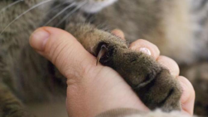Kedilerin Nefret Ettiği 5 Şey!