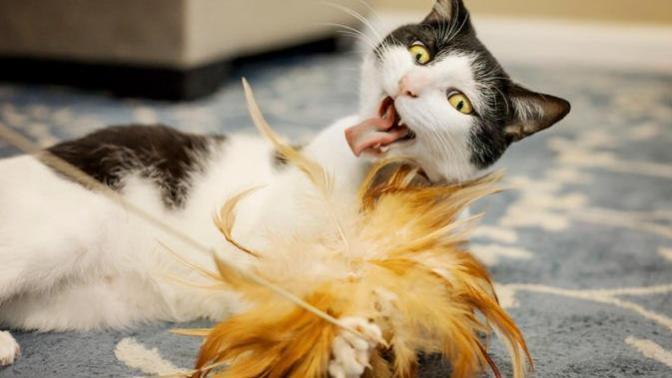 Patililere Şenlik Var: Akıllı Kediler İçin Ortamı Renklendirecek Akıllı Ürünler! 🐾