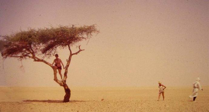 Ağacın Tepesindeki Kişi Kamyon Sürücüsü Değil.
