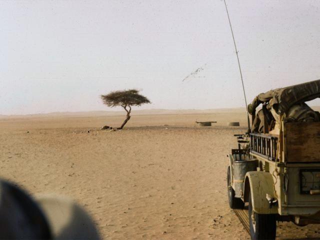 En Yalnız Ağaç: Tenere Ağacı!