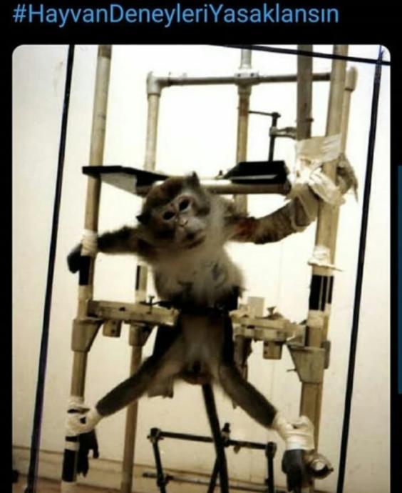 Hayvan Deneyleri Hakında Korkunç Gerçekler!