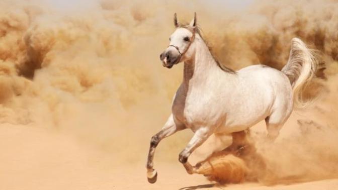 Vahşi Doğadaki Yaşam Mücadelesi: Yılkı Atları!