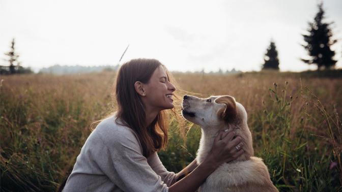 Hayvanseverler Buraya! 5199 sayılı Hayvanları Koruma Yasası'nda Yapılması Önerilen Düzenlemeler Hakkında Bilinmesi Gerekenler