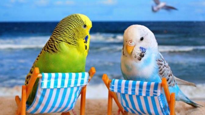 Muhabbet Kuşu Almadan Önce Bilmeniz Gereken 5 Şey!