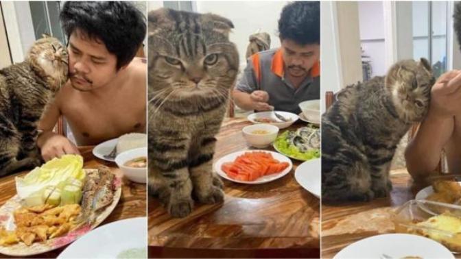 Sahibini Eşinden Kıskanan Kedinin Birbirinden Komik 10 Fotoğrafı!