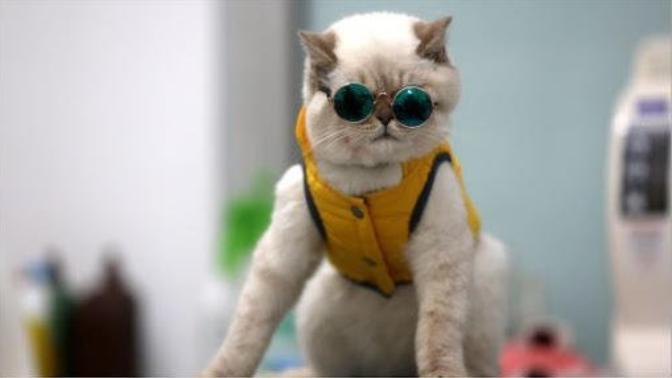 Kedilerin Birbirinden Tatlı 5 Karakteristik Özelliği!