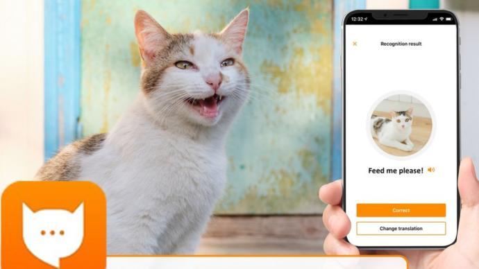 Kedi Sahiplerine Müjde! Kedinizin Ne Dediğini Anlamak için Uygulama Geliştirildi: MeowTalk