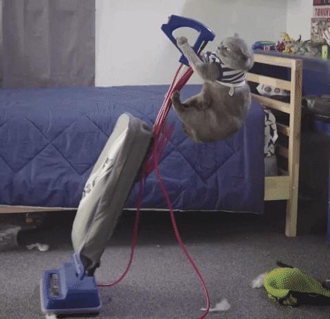 Evler Şipşak temizlensin