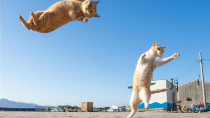 Kedi dostlarımızın mutluluğu