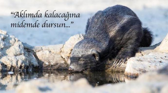 Hayvanlar Aleminin Süleyman Çakırını Tanıyalım!