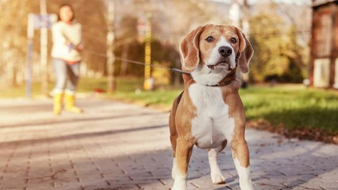 Köpek Bakımında Dikkat Edilmesi Gereken Hususlar!