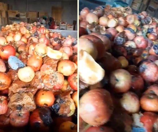 Meyve suyu fabrikasındaki meyveler