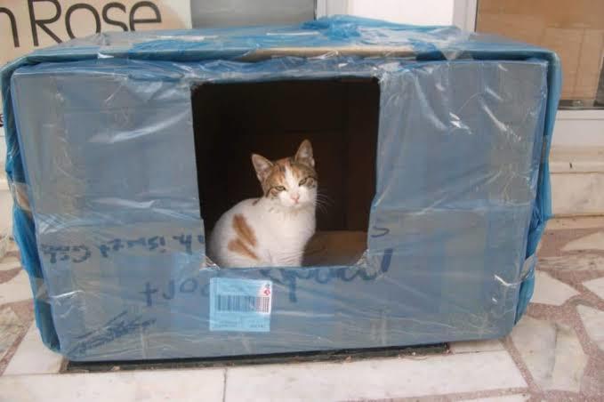 Kartondan kedi evi yapımı