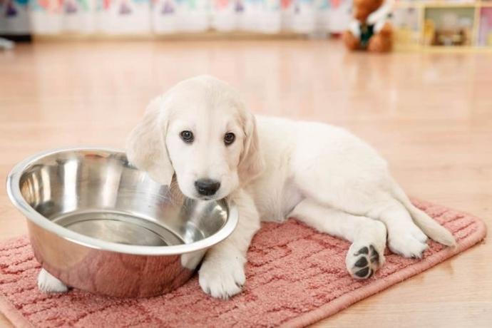 Evcil Hayvan Besleyenler Hadi Toplanın: Hayatınızı Kolaylaştıracak Bazı Öneriler!