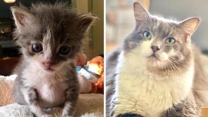 Sevgi İyileştirir! Minik Kedilerin Birkaç Doz Sevgi ile Büyümeleri!