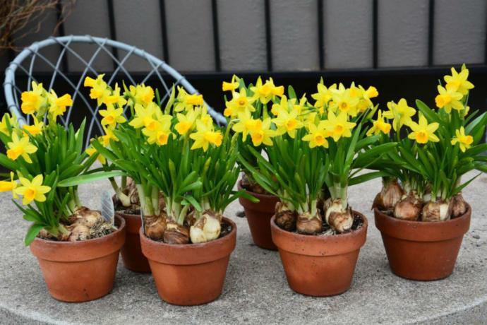 Bahar Kapıyı Çalarken: Kışın Son Aylarında Dikmeniz Gereken Çiçekler