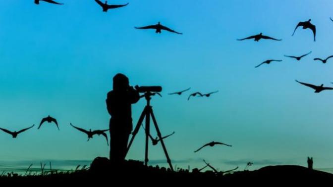 Dürbünler Hazır mı? : Türkiye'deki En Güzel Kuş Gözlem Rotaları