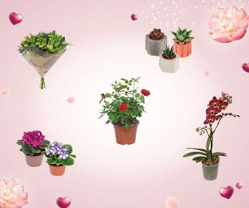 Annen evde otururken bile kendini çiçek bahçesinde gibi hissetsin istiyorsan çiçeklerdeki 12 Mayıs'a kadar sürecek indirimi keşfet!