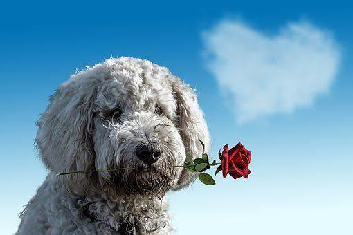 Aşkın Akıl Almaz Tarifleri!