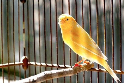 Evde Beslemek İçin Uygun Olan Kuş Türleri!