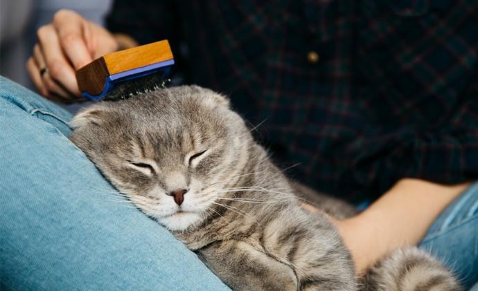 Kediniz İçin En Uygun Mama Seçimi!