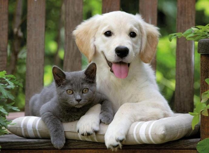 Kedi Veya Köpek Sahibi Olanların Denemesi Gereken Ürünler!