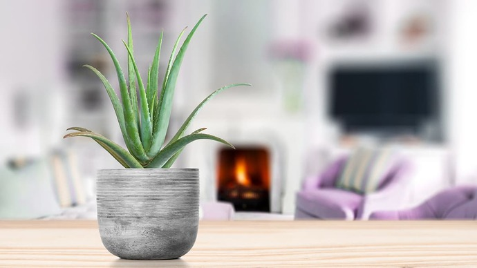 Aloe Verayla Bakım Yapmaya Ne Dersiniz? İşte Aloe Veranın Cildimize Faydaları!