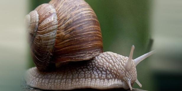 Hayvanlar Hakkında Değişik, İlginç ve Az Ama Öz Bilgiler!