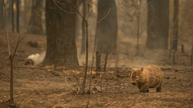 Orman Yangınından Zarar Görmüş Hayvan Bulursanız Ne Yapmalısınız?