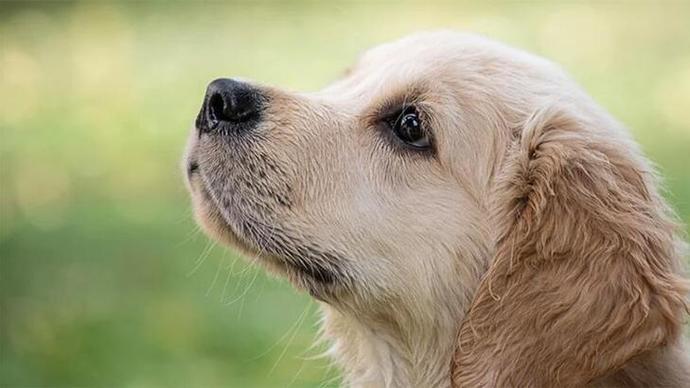 Evcil Hayvanlarınızın Depresyonda Olduğunu Gösteren İşaretler!