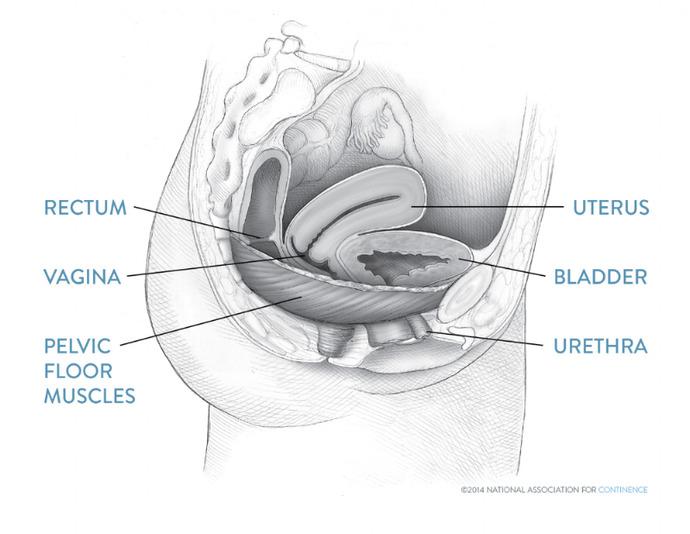 Vajinismus ve Vulvar Vestibulit Sendromu Arasındaki Farklar