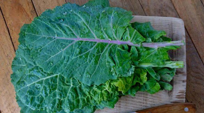 Sağlığımız İçin Tüketmemiz Gereken Yeşillikler!