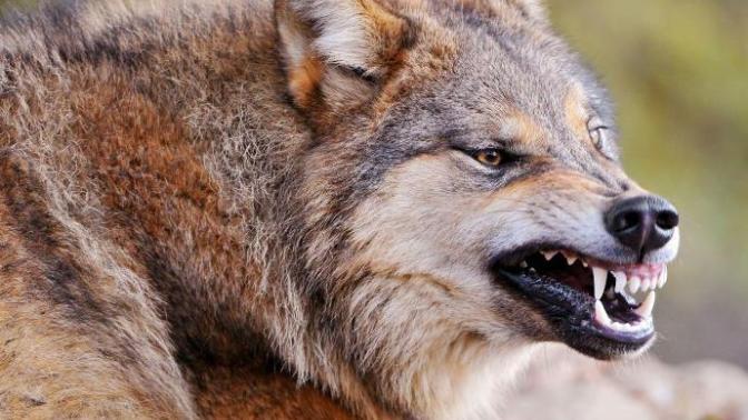 Karşılaştığınız Zaman Aklınızı Kaybettirebilecek Vahşi Hayvanlar!