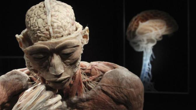 Bir Garip Mekan: İnsan Vücudu Sergisi