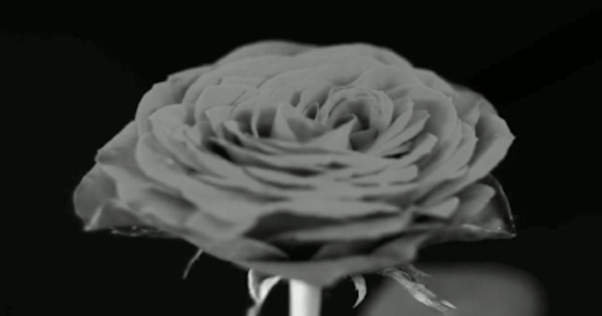 Черно-белая анимация картинки, днем рождения