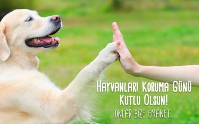 Bugun 4 Ekim Hayvanlari Koruma Gunu Toplumumuzun Hayvanlara Karsi