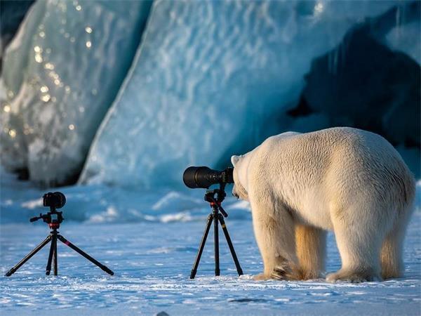 Komik Doğa Fotoğrafçılığı Ödülleri'nde ödülü hak eden ve en komik olan fotoğraf hangisi?
