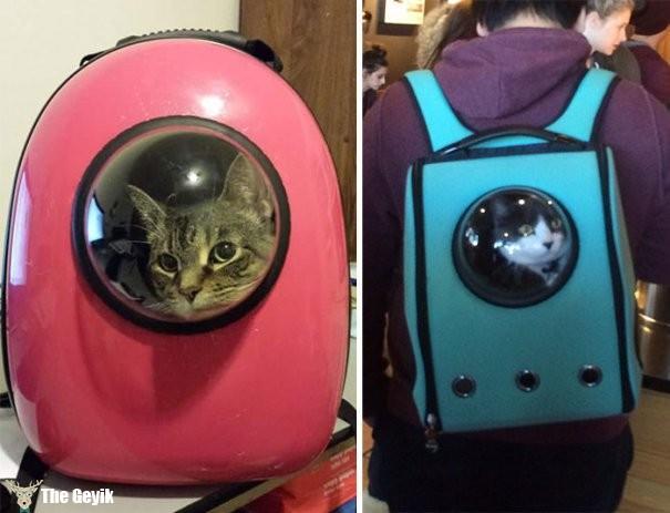 kedi taşıma sırt çantası
