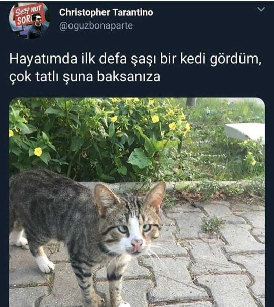 Kediler de şaşı oluyor mu?